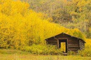 USA, Colorado, White River National Forest. Ashcroft Ghost Town cabin. by Jaynes Gallery