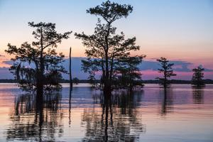 USA, Louisiana, Atchafalaya National Wildlife Refuge. Sunrise on swamp. by Jaynes Gallery