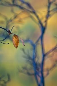 USA, Maine, Acadia National Park. Autumn Leaves and Tree Abstract by Jaynes Gallery