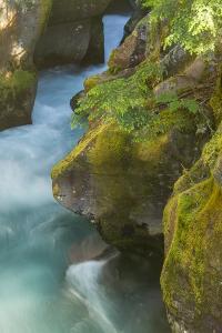 USA, Montana, Glacier National Park. Avalanche Creek scenic. by Jaynes Gallery