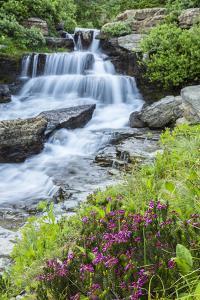 USA, Montana, Glacier National Park. Lunch Creek cascade. by Jaynes Gallery