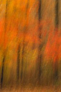 USA, New Jersey, Belleplain State Forest. Abstract of forest in autumn. by Jaynes Gallery