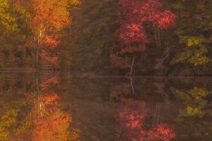 USA, New Jersey, Belleplain State Forest. Autumn tree reflections on lake. by Jaynes Gallery
