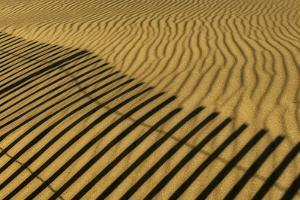 USA, New Jersey, Cape May National Seashore. Fence shadow on shore sand. by Jaynes Gallery
