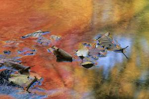 USA, New York, Adirondack Mountains. Autumn Reflections in Stream by Jaynes Gallery