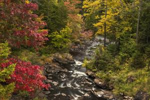 USA, New York, Adirondack State Park. Stream and forest in autumn. by Jaynes Gallery