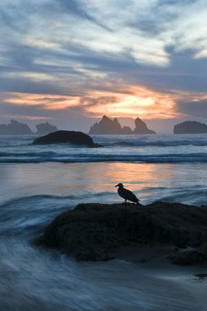 USA, Oregon, Bandon Beach. Seagull on Rock at Twilight