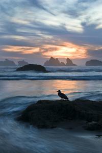 USA, Oregon, Bandon Beach. Seagull on Rock at Twilight by Jaynes Gallery