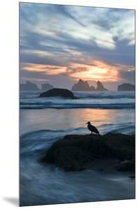 USA, Oregon, Bandon Beach. Seagull on Rock at Twilight by Jaynes Gallery