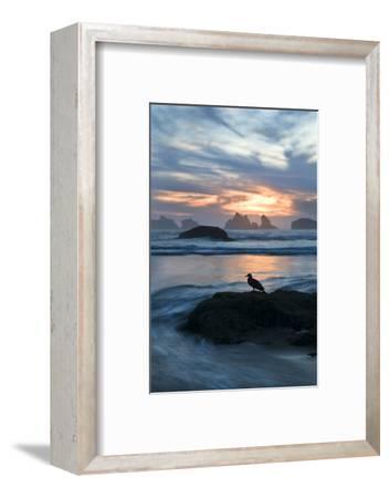 USA, Oregon, Bandon Beach. Seagull on Rock at Twilight