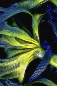 USA, Oregon, Cape Arago. Abstract photo of Pacific bull kelp. by Jaynes Gallery