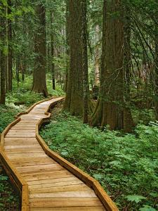 USA, Oregon, Mt. Hood National Forest. Boardwalk in forest. by Jaynes Gallery