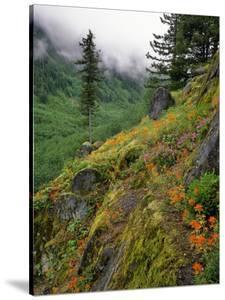 USA, Oregon, Mt Hood National Forest. Hillside Landscape in Fog by Jaynes Gallery