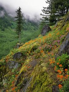 USA, Oregon, Mt Hood National Forest. Hillside Landscape in Fog by Jaynes Gallery