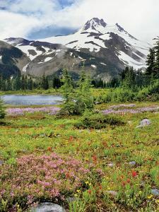 USA, Oregon, Mt Jefferson Wilderness. Mount Jefferson and Field of Wildflowers by Jaynes Gallery