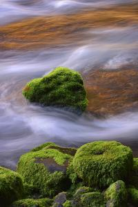 USA, Oregon, Willamette National Forest. Mckenzie River Flowing over Moss-Covered Rocks by Jaynes Gallery