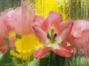USA, Pennsylvania. Abstract Tulip Impression Through Glass by Jaynes Gallery