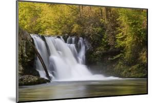 USA, Tennessee, Great Smoky Mountains National Park. Abrams Falls Landscape by Jaynes Gallery