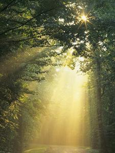 USA, Tennessee. Sunlight filters through trees. by Jaynes Gallery
