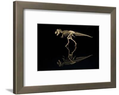 USA, Tennessee. T-Rex Skeleton Replica Reflection