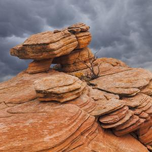 USA, Utah, Dixie National Forest. Sandstone Formation in Yant Flats by Jaynes Gallery