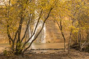 USA, Utah, Grand Staircase-Escalante National Monument. Lower Calf Creek Falls and trees. by Jaynes Gallery