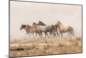 USA, Utah, Tooele County. Wild horses and dust. by Jaynes Gallery
