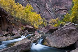 USA, Utah, Zion National Park. Canyon Waterfall with Cottonwood Trees by Jaynes Gallery