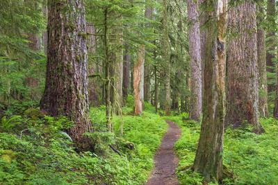 USA, Washington, Olympic National Park. Scenic of Old Growth Forest