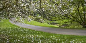 USA, Washington State, Bainbridge Island. Road through garden. by Jaynes Gallery