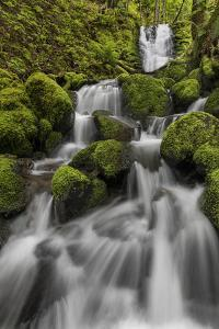 USA, Washington State, Gifford Pinchot National Forest. Lewis River waterfall. by Jaynes Gallery