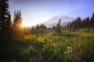 USA, Washington State, Mt Rainier NP. Sunset on mountain wildflowers. by Jaynes Gallery
