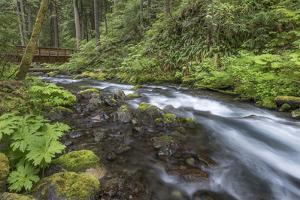 USA, Washington State, Olympic National Forest. Bridge over Big Quilcene River rapids. by Jaynes Gallery