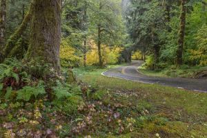 USA, Washington State, Olympic NP. Road through forest. by Jaynes Gallery
