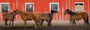 USA, Washington State, Palouse. Panoramic of horses next to red barn. by Jaynes Gallery