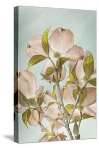 USA, Washington State, Seabeck. Colorized pink dogwood blossoms. by Jaynes Gallery