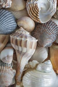 USA, Washington State, Seabeck. Seashells variety. by Jaynes Gallery