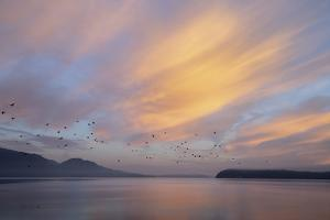 USA, Washington State, Seabeck. Sunrise over Hood Canal. by Jaynes Gallery