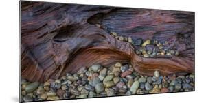 USA, Washington State, Seabeck. Wet driftwood and beach rocks. by Jaynes Gallery