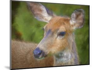 USA, Washington State, Seabeck. Young female black-tail deer. by Jaynes Gallery