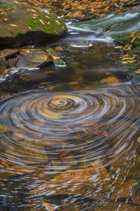 USA, West Virginia, Blackwater Falls State Park. Whirlpool in stream. by Jaynes Gallery