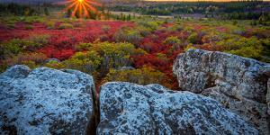 USA, West Virginia, Dolly Sods Wilderness Area. Sunset on tundra and rocks. by Jaynes Gallery