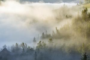 USA, Wyoming, Yellowstone NP. Mist envelopes the Yellowstone River canyon. by Jaynes Gallery