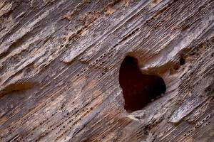 Utah, Capitol Reef National Park. Heart-Shaped Hole in Rock by Jaynes Gallery
