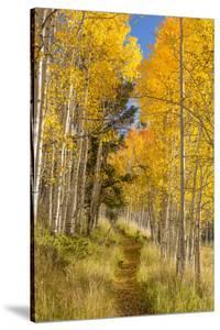 Utah, Fishlake National Forest. Trail in Aspen Trees by Jaynes Gallery