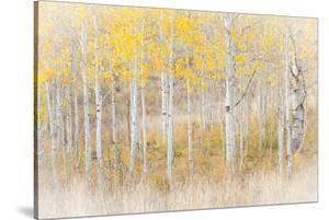 Utah, Manti-La Sal National Forest. Aspen Forest Scenic by Jaynes Gallery