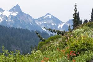 Washington, Mount Rainier National Park. Alpine Meadow and the Tatoosh Range by Jaynes Gallery