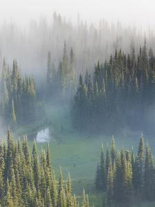 Washington, Mount Rainier National Park. Overview of Surprise Lake by Jaynes Gallery