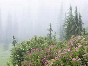 Washington, Mount Rainier National Park. Wildflowers in Misty Forest by Jaynes Gallery