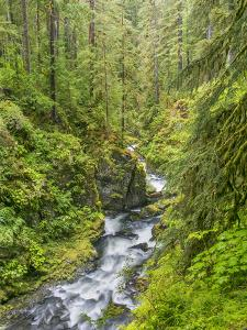 Washington State, Olympic National Park. Landscape with Sol Duc River by Jaynes Gallery